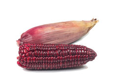 Purple corn cob Stock Photo