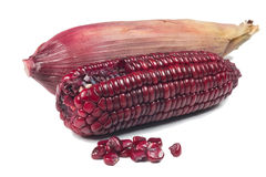 Purple corn cob Royalty Free Stock Photography
