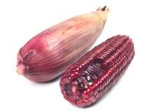 Purple corn cob Royalty Free Stock Photography