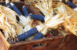 Purple corn in crate Royalty Free Stock Photos