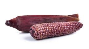 Purple corn isolated on white background Royalty Free Stock Photos