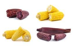 Purple corn isolated on white background Stock Photo