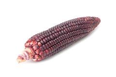 Purple corn Stock Images