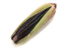Purple corn isolated on white background. Fresh corn harvest royalty free stock photography