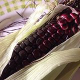 Purple corn Royalty Free Stock Image