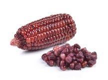 Purple corn on white background Stock Image