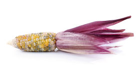 Purple corn Royalty Free Stock Images