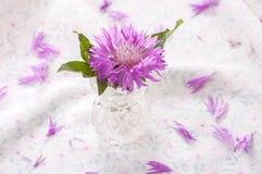 Purple cornflower on glass vase. On tablecloth Stock Photography