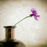 Purple cornflower in vase Royalty Free Stock Photos