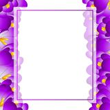 Purple Crocus Flower Banner Card. Vector Illustration.  royalty free illustration