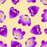 Purple Crocus Flower on Beige Ivory Background. Vector Illustration Vector Illustration