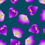 Purple Crocus Flower on Blue Indigo Background. Vector Illustration Royalty Free Illustration