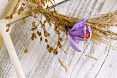 Purple crocus flower in dry wreath Stock Images