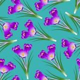 Purple Crocus Flower on Green Teal Background. Vector Illustration Stock Illustration