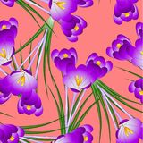 Purple Crocus Flower on Orange Red Background. Vector Illustration Royalty Free Illustration