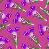 Purple Crocus Flower on Pink Background. Vector Illustration Stock Illustration