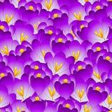 Purple Crocus Flower Seamless Background. Vector Illustration Vector Illustration