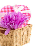 Purple crocus flowers  and gift box Stock Image