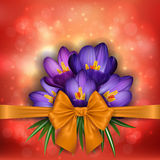 Purple crocus flowers with golden bow Stock Image