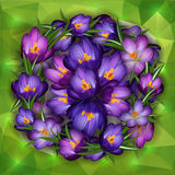Purple crocus flowers with triangle background. Illustration of purple crocus flowers with triangle background Royalty Free Stock Photos