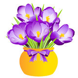 Purple Crocus in Vase on a White Background. Vector Illustration royalty free illustration