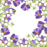 Purple Crocus and white Convallaria majalis. Green flower pattern, grass. Flat vector illustration on white background. Flowers in ceramic basket. Purple Crocus stock images
