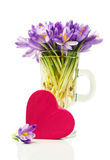 Purple crocuses in a glass and pink gift box in heart shape Royalty Free Stock Image