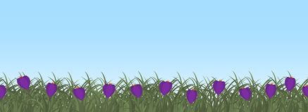 Purple crocuses in green grass on a blue sky background. Border. Spring flowers. It can be used as a seamless sample. Vector illustration Royalty Free Stock Photos