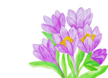Purple crocuses, painting Royalty Free Stock Image
