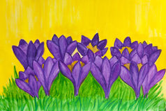 Purple crocuses on yellow background, watercolor Stock Photos