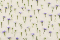 Purple cutter flowers pattern Stock Images