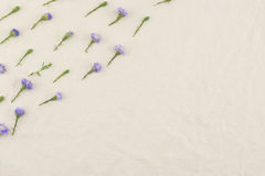 Purple cutter flowers pattern Stock Photos
