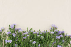 Purple cutter flowers on white muslin fabric Stock Images