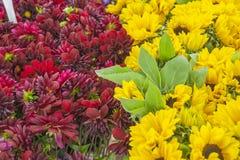Purple Dahlias and yellow Sunflowers Royalty Free Stock Photo