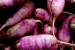 Purple Daikon Radishes Stock Photography