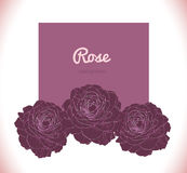 Purple dark rose vector background Stock Photo