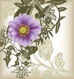 Purple dasiy flower and bird Stock Photo