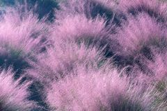 Purple desert foliage Stock Images