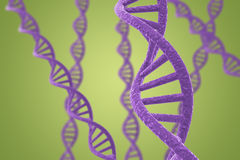 Purple DNA helices on a green background Royalty Free Stock Images