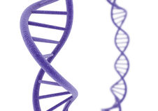Purple DNA. DNA isolated on a white background vector illustration