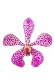 Purple dots orchid head Stock Images