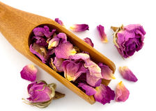 Purple dried petals of rose Stock Images