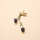 Purple dry flower with wooden clip on pink background. Top view Royalty Free Stock Photography
