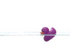 Purple duck sinking Stock Images