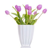 Purple Dutch tulips Royalty Free Stock Photo