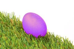 Purple Easter egg Royalty Free Stock Photography