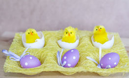 Purple  easter eggs  with dots in small yellow basket Stock Images