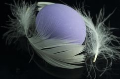 Purple egg with white plume. On black background Royalty Free Stock Images