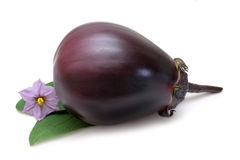 Purple Eggplant Stock Photography