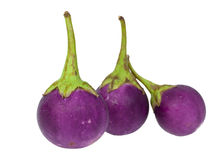 Purple eggplant Royalty Free Stock Photography